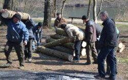 Primarii din Tara Oasului reclama defrisarile ilegale din paduri