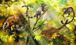 "Descoperirea unor ""veverite"" din Jurassic ofera indicii noi cu privire la evolutia mamiferelor"