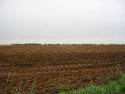 Cum crestem fertilitatea solului in agricultura ecologica?