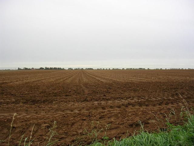 Aprobarea unei scheme de minimis în sectorul agriculturii ecologice