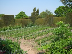 Sfaturi pentru o gradina de legume ecologice