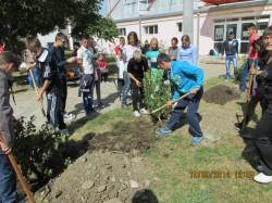 """Elevii Liceului Tehnologic Agricol Bistrita planteaza pomi """"pentru pace"""" in curtea scolii"""