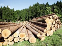 ANRP, noi sesizari privind retrocedarile de terenuri: Vizate, peste 2.600 de hectare de padure din judetul Prahova