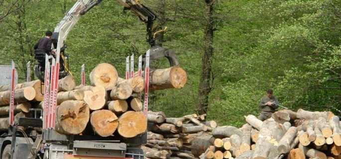Samsarii cumpără puncte la o treime din valoare pentru a pune mâna pe terenuri şi păduri de 11 mld. €