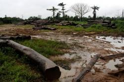 Liberia primeste bani de la Norvegia ca sa nu-si mai taie padurile