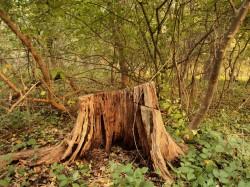 Impotenta clasei politice in solutionarea problemelor stringente ale sectorului forestier din Romania