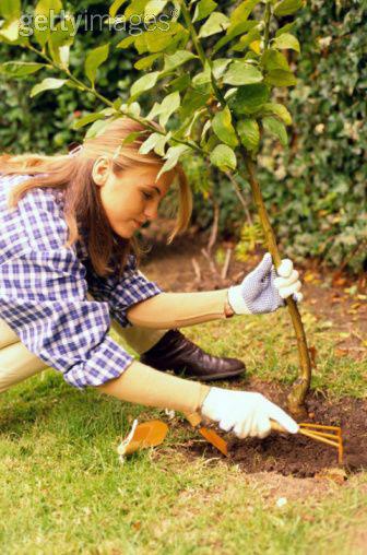 Momente importante din viata marcate cu plantari de copaci