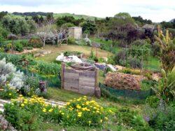 Premiera: Curs de permacultura in Bihor
