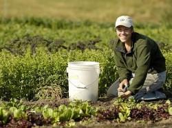 """La Ploiesti, conferinta cu tema """"Agricultura ecologica – oportunitate pentru Romania"""""""