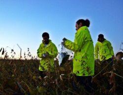 Avertismentul GreenPeace privind culturile modificate genetic