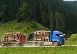 Furtul din padurile tarii: 5 miliarde de euro