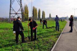 Copaci pentru tot orasul: In aceasta toamna, in Oradea vor fi plantati peste 800 de puieti, fiecare cu o garantie de doi ani