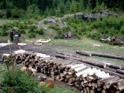 Sumal tine departe de paduri hotii de lemne