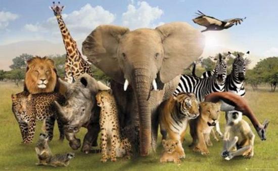 Alerta ecologic? pe Terra! Num?rul animalelor s?lbatice a sc?zut la jum?tate, iar oamenii sunt principalii vinova?i pentru acest dezastru!