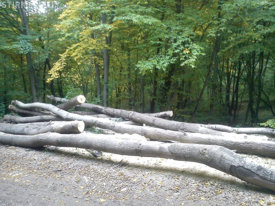 Romanii au inceput sa revina la incalzirea pe lemne din cauza facturilor mari. Cat ii costa investitia intr-un semineu