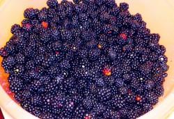 Nemtii fac delicatese din fructele culese din padurile judetului