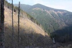 Seful Directiei Silvice Arges recunoaste dezastrul din paduri, dar spune ca nu poate face nimic