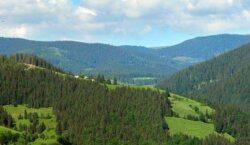 Circa 483 ha din padurea statului au fost retrocedate ilegal la Berevoiesti, fara sa mai treaca prin Comisia Judeteana de Fond Funciar