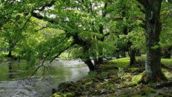 Structuri de economie sociala responsabile si protectia mediului inconjurator