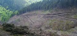 Judetul Valcea este raiul defrisarilor masive de paduri si taierilor ilegale de lemne