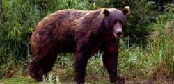 Consultari la Gorj privind managementul populatiei de urs brun