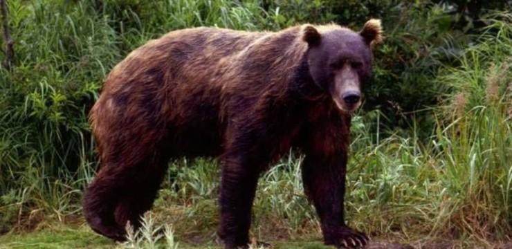 Consult?ri la Gorj privind managementul popula?iei de urs brun