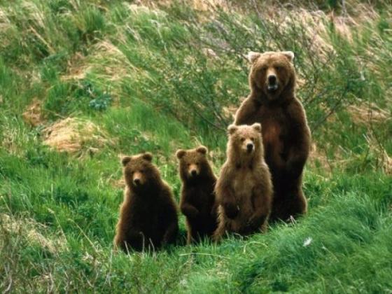 Doi urși chinuiți într-o grădină zoologică din Armenia vor ajunge în rezervația de la Zărnești