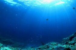 Leonardo DiCaprio a donat 2 milioane de dolari pentru protejarea oceanelor