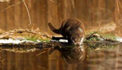 Biodiversitate remarcabila in Podisul Transilvaniei
