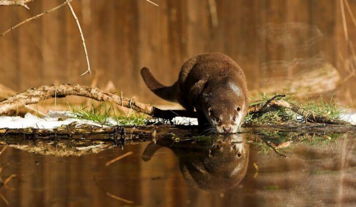 Cinci licee din Banatul Montan se pregătesc să devină ambasadori ai naturii sălbatice