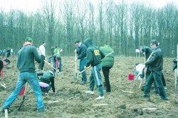 Se vor impaduri 32 ha de teren degradat la Balaceana