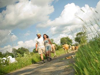 Utilizarea energiilor alternative intr-o ferma de vaci