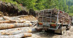 Firmele de exploatare forestiera refuza sa se prezinte la control