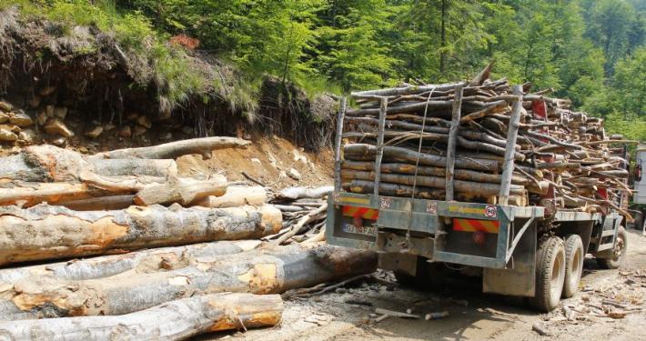 Firmele de exploatare forestier? refuz? s? se prezinte la control