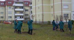Bacau: Se planteaza copaci