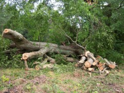 Infractionalitatea contra mediului inconjurator este in crestere