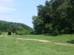 Parchetul Ploiesti, sesizat pentru retrocedarea a 980 de hectare de padure din Magureni