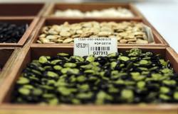 Istoria patentarii semintelor – sau cum fara inovatie, nu ar fi existat progres