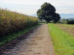 Guvernul German sustine politicile privind agricultura ecologica