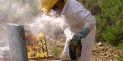 Mortalitate fara precedent in randul albinelor