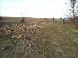 Taiau ilegal lemne din padurea de langa Sacosul Mare. Doi barbati inarmati cu o drujba au fost prinsi in flagrant de jandarmi