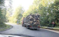 Miza retrocedarilor ilegale de paduri. Exportul de cherestea, o afacere in crestere