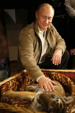 Un tigru siberian eliberat de Putin ii terorizeaza pe fermierii chinezi de la granita