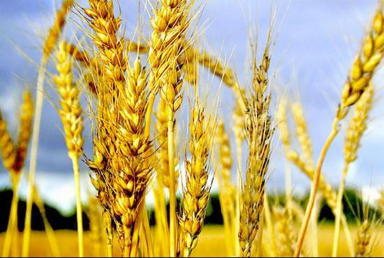 Securitatea alimentară, în pericol din cauza încălzirii climatice