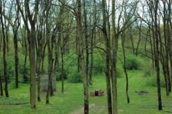 Parcul Natural Lunca Muresului (Arad), paradis al biodiversitatii