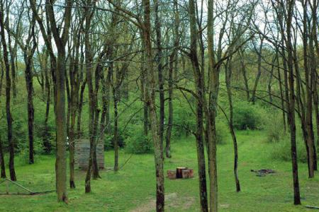 Parcul Natural Lunca Mure?ului (Arad), paradis al biodiversit??ii