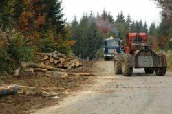 Asociatiile si composesoratele nu pot exploata lemnul din padure decat cu firme specializate