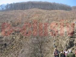 Padurile Gorjului, impadurite cu 50.000 de puieti