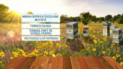 Doar 5% din mierea produsa in Romania este considerata ecologica. Motivul pentru care romanii o prefera pe cea naturala