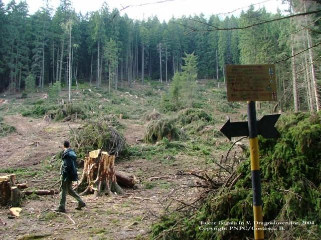Korodi: Consumul de pungi de plastic a sc?zut cu 25%. De la anul se va lua în considerare reducerea plasticului din ambalaje